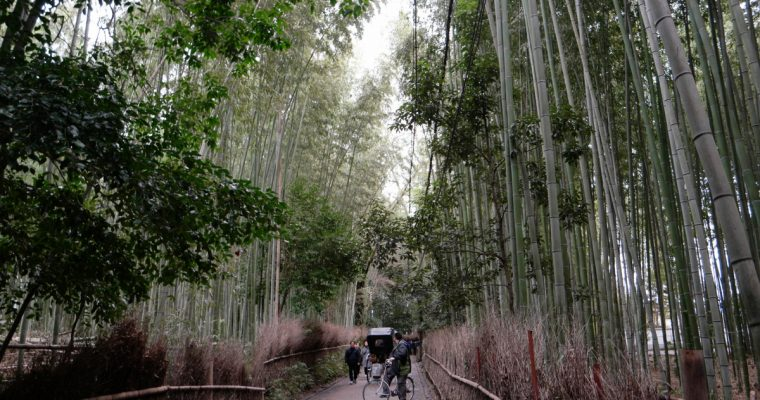 Things to do in Arashiyama (Winter)