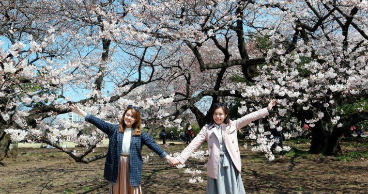 Japan Trip 2017: 7D6N Spring in Tokyo & Hakone